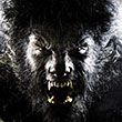 CRITIQUE : Wolfman - Blu-ray Disc