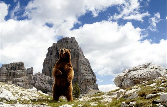 Photo L'ours